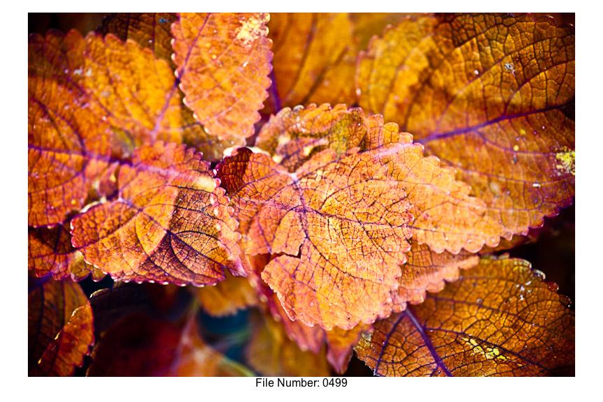English Gardens H prints-01