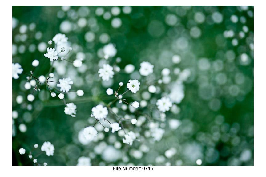 English Gardens H prints-18