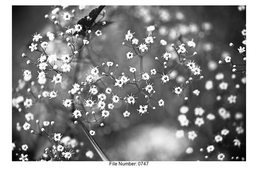 English Gardens H prints-21