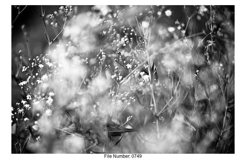 English Gardens H prints-22
