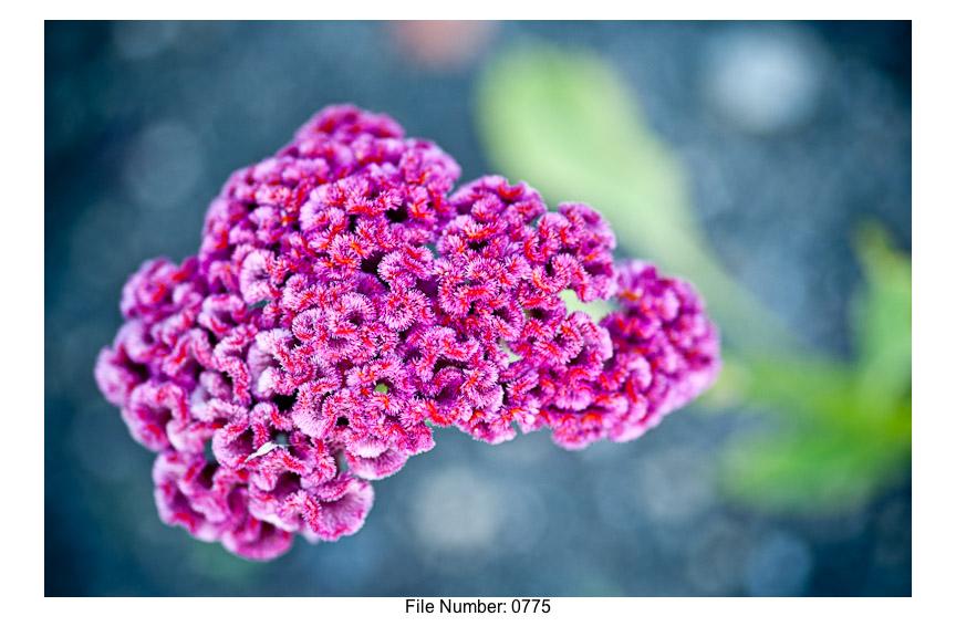 English Gardens H prints-24
