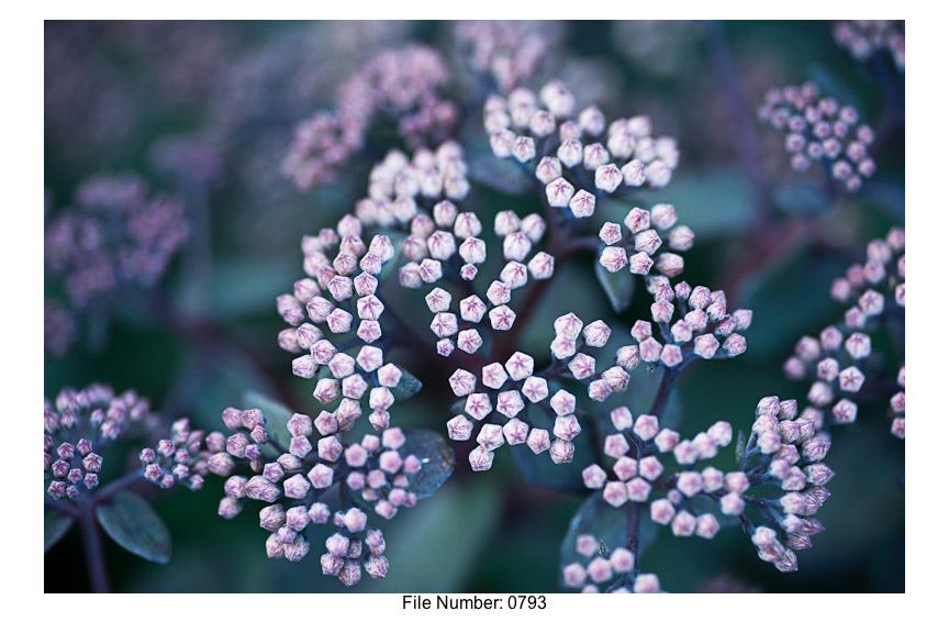 English Gardens H prints-25