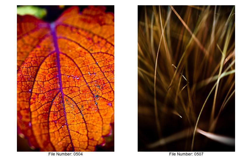English Gardens V prints-01