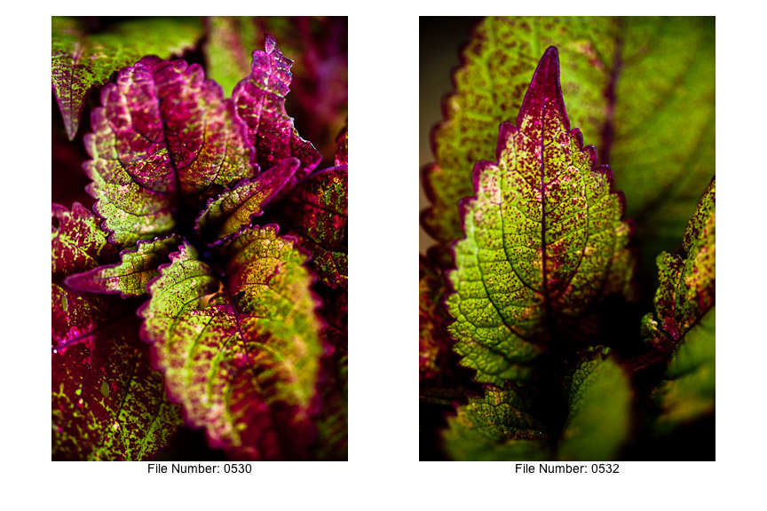 English Gardens V prints-02