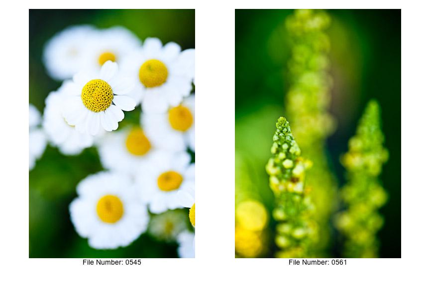 English Gardens V prints-03