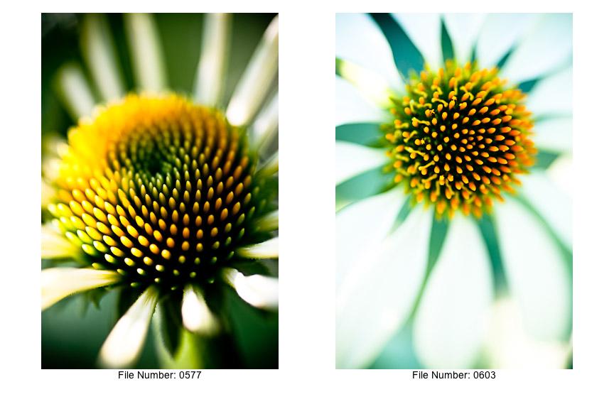 English Gardens V prints-04