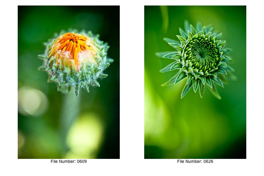 English Gardens V prints-05