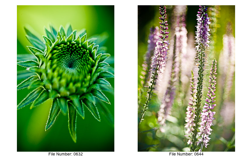 English Gardens V prints-06