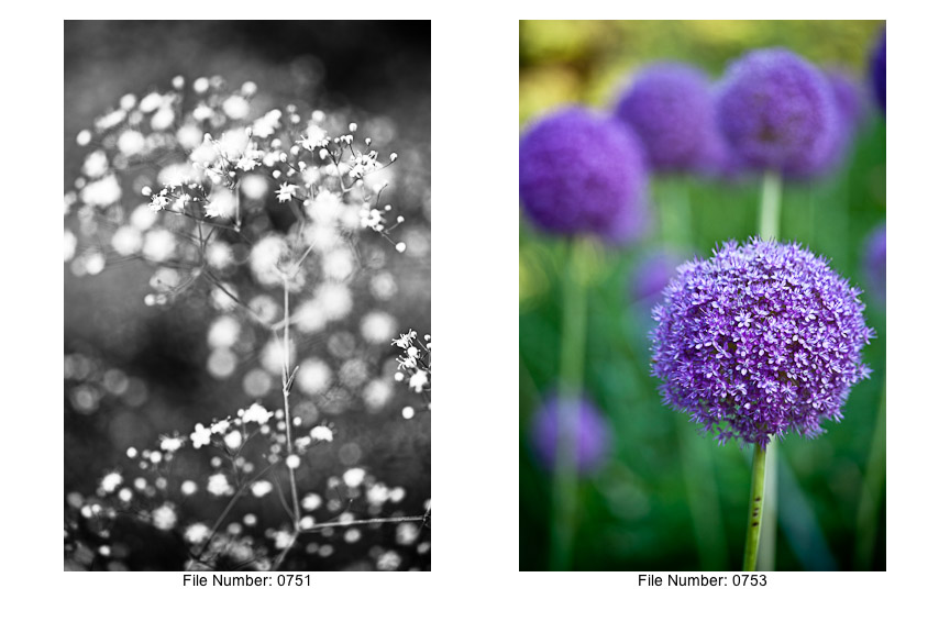 English Gardens V prints-09
