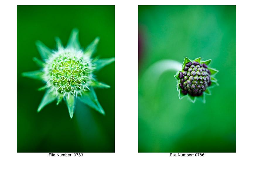 English Gardens V prints-10