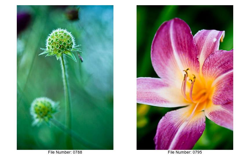 English Gardens V prints-11