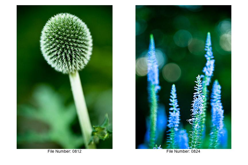 English Gardens V prints-12