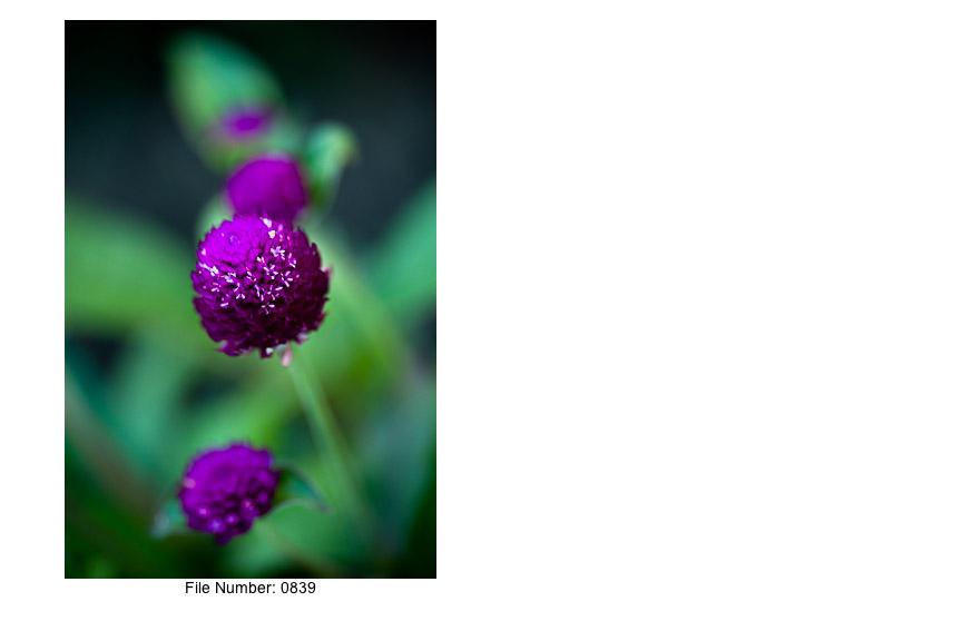 English Gardens V prints-13